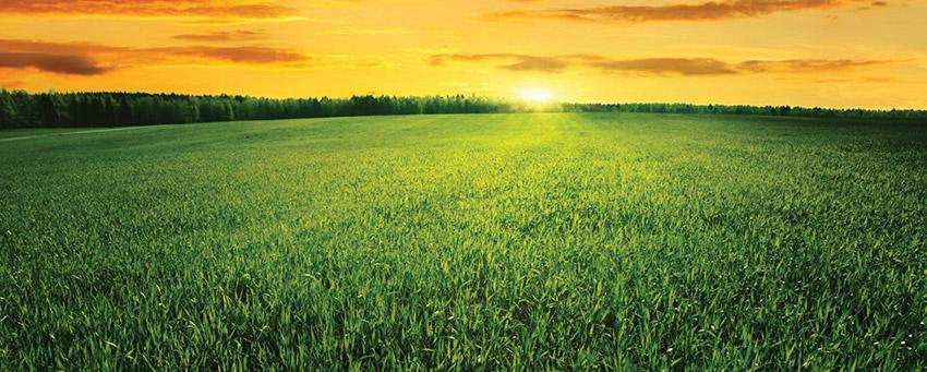 como-divulgar-sua-empresa-agronegocio-marketing-digital-e-publicidade-12