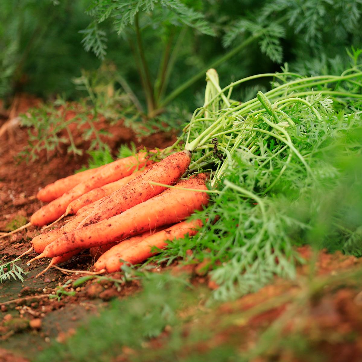 Um dos elementos mais importantes para o Marketing do Agronegócio da Fazenda Alvorada (Cebolas RIKA) é o uso de imagens de qualidade no novo site.