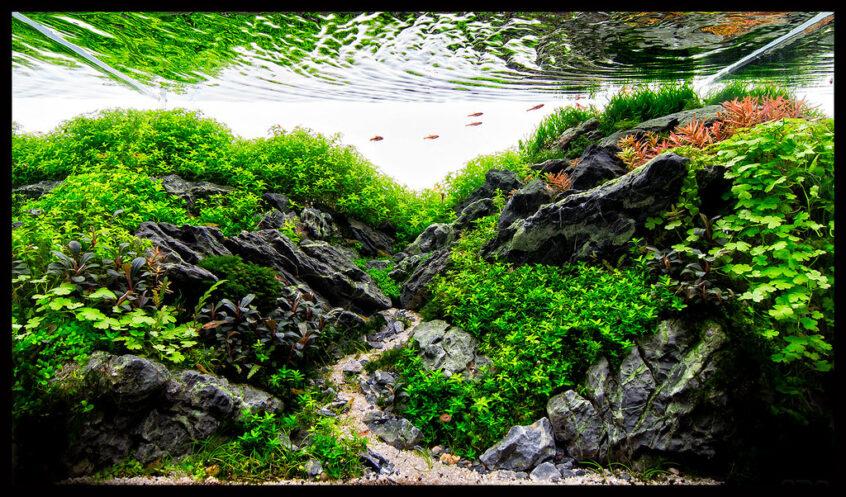 Saiba o que é o Aquapaisagismo ou Aquascaping e viaje nesse mundo de beleza e criatividade com inspiração direta com a natureza.
